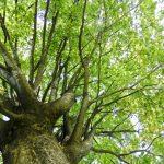 新潟県 西蒲区 木